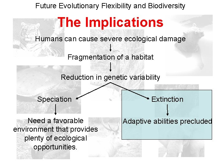 Future Evolutionary Flexibility and Biodiversity The Implications Humans can cause severe ecological damage Fragmentation
