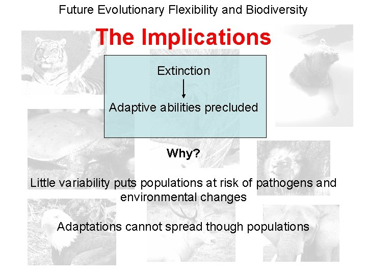 Future Evolutionary Flexibility and Biodiversity The Implications Extinction Adaptive abilities precluded Why? Little variability