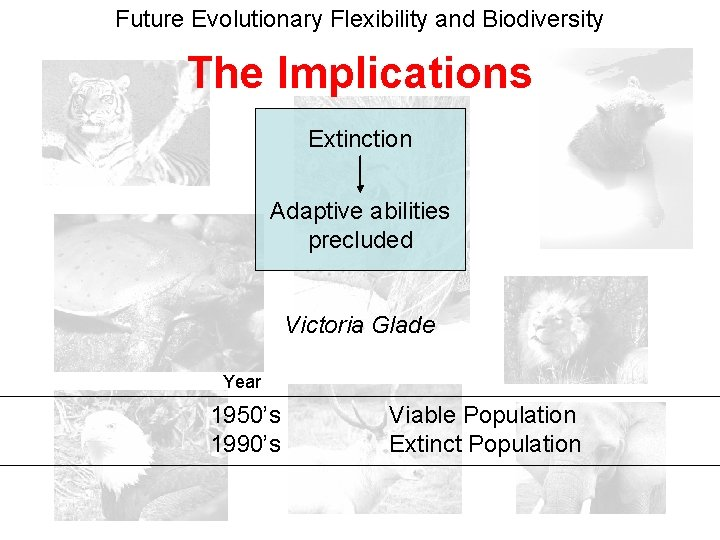 Future Evolutionary Flexibility and Biodiversity The Implications Extinction Adaptive abilities precluded Victoria Glade Year