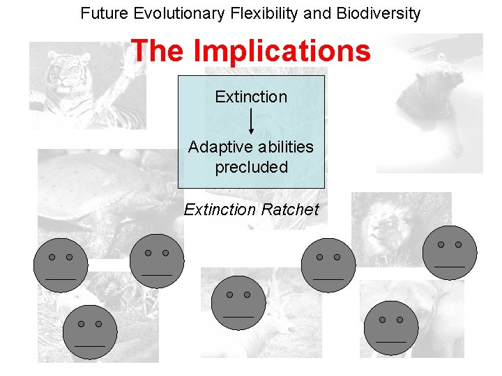 Future Evolutionary Flexibility and Biodiversity The Implications Extinction Adaptive abilities precluded Extinction Ratchet