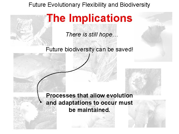 Future Evolutionary Flexibility and Biodiversity The Implications There is still hope… Future biodiversity can