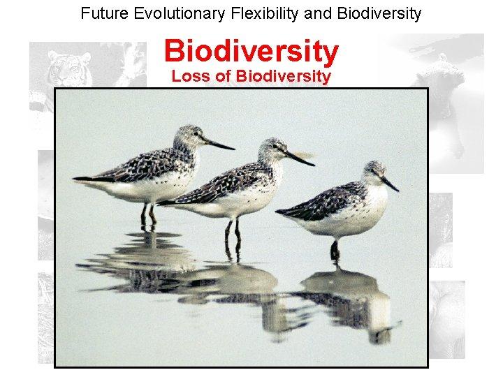 Future Evolutionary Flexibility and Biodiversity Loss of Biodiversity