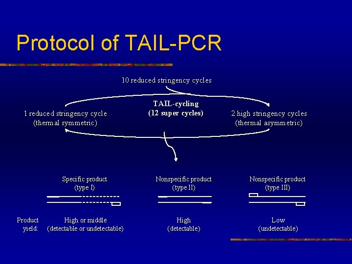 Protocol of TAIL-PCR 10 reduced stringency cycles 1 reduced stringency cycle (thermal symmetric) Product