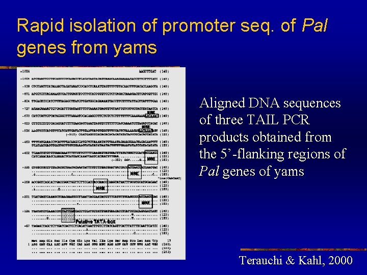 Rapid isolation of promoter seq. of Pal genes from yams Aligned DNA sequences of