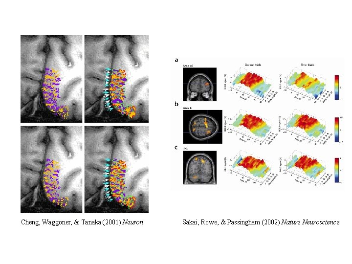 Cheng, Waggoner, & Tanaka (2001) Neuron Sakai, Rowe, & Passingham (2002) Nature Neuroscience