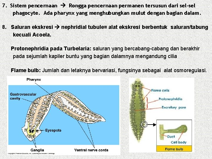 Nemathelminthes reproduksi
