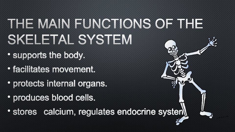 THE MAIN FUNCTIONS OF THE SKELETAL SYSTEM • • •