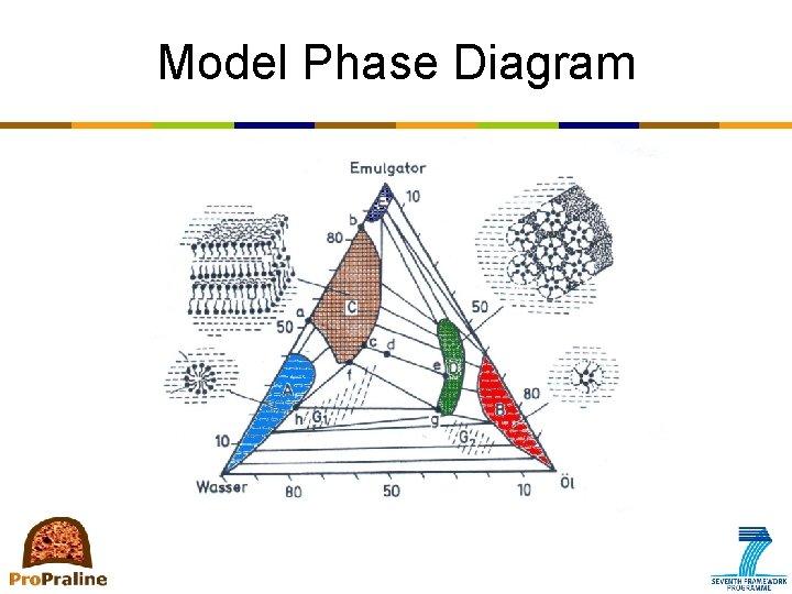 Model Phase Diagram