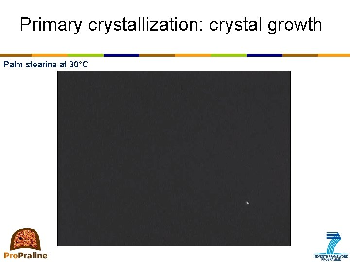 Primary crystallization: crystal growth Palm stearine at 30°C