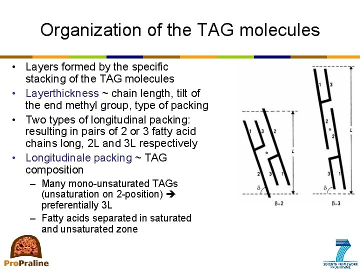 Organization of the TAG molecules • Layers formed by the specific stacking of the
