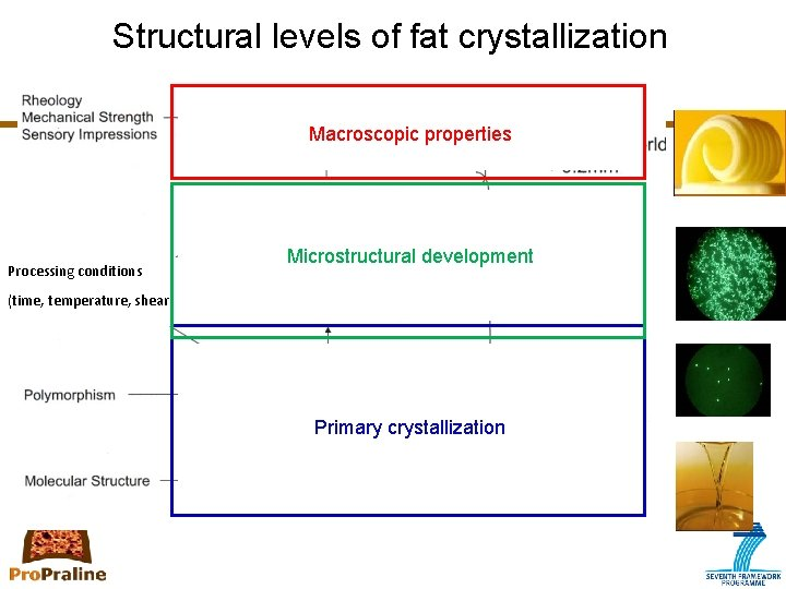 Structural levels of fat crystallization Macroscopic properties Processing conditions Microstructural development (time, temperature, shear)