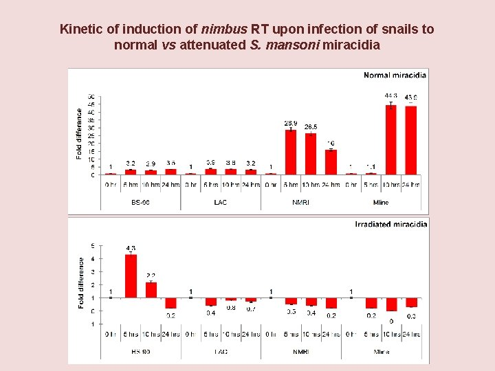 Kinetic of induction of nimbus RT upon infection of snails to normal vs attenuated