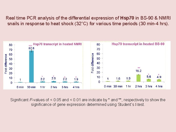 Real time PCR analysis of the differential expression of Hsp 70 in BS-90 &