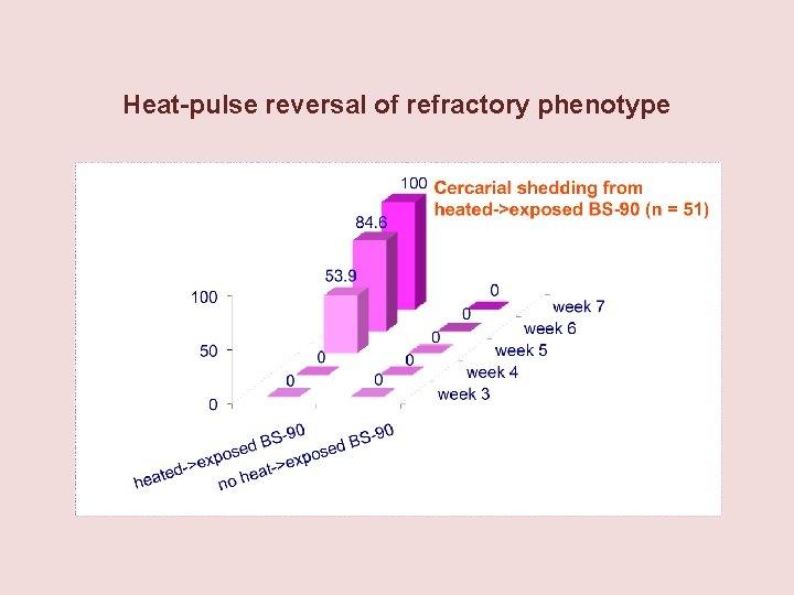 Heat-pulse reversal of refractory phenotype
