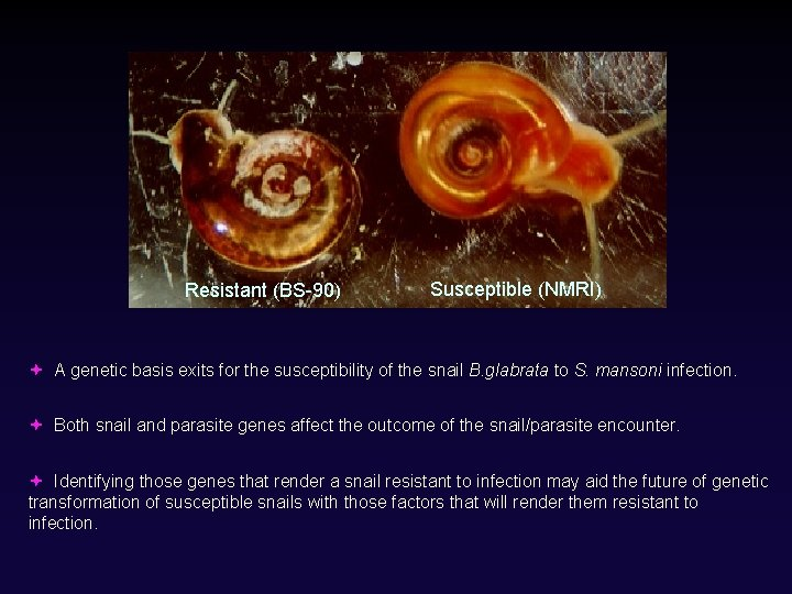 Resistant (BS-90) Susceptible (NMRI) A genetic basis exits for the susceptibility of the snail