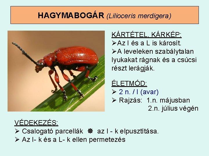 paraziták a májusi bogárban