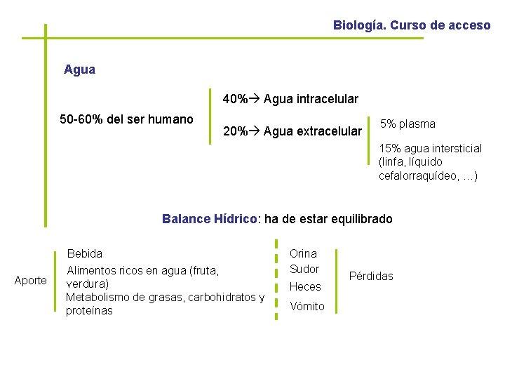 Biología. Curso de acceso Agua 40% Agua intracelular 50 -60% del ser humano 20%
