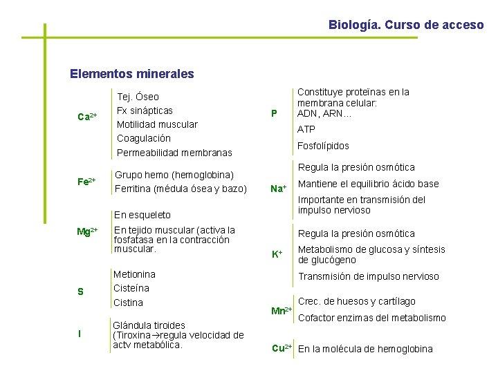 Biología. Curso de acceso Elementos minerales Ca 2+ Fe 2+ Tej. Óseo Fx sinápticas