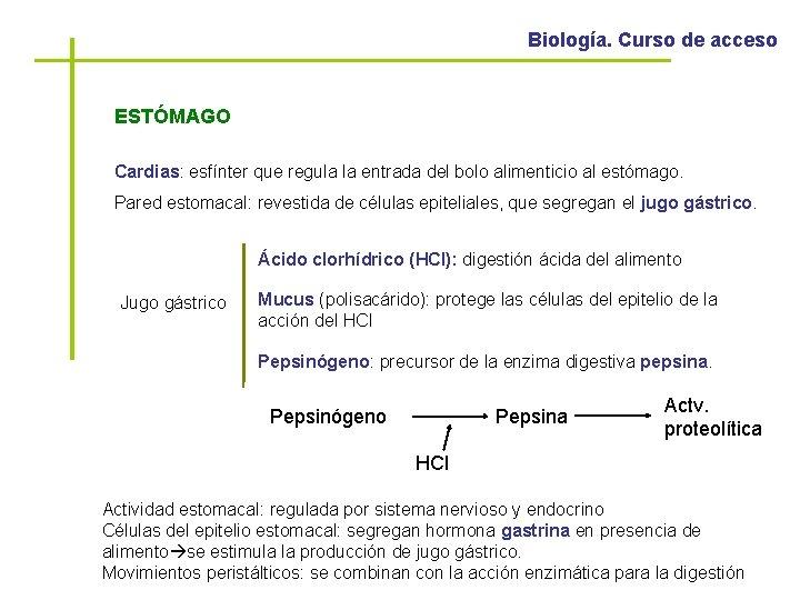 Biología. Curso de acceso ESTÓMAGO Cardias: esfínter que regula la entrada del bolo alimenticio