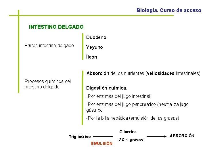 Biología. Curso de acceso INTESTINO DELGADO Duodeno Partes intestino delgado Yeyuno Íleon Absorción de