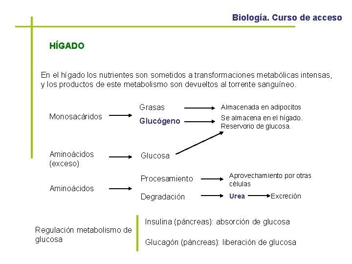 Biología. Curso de acceso HÍGADO En el hígado los nutrientes son sometidos a transformaciones