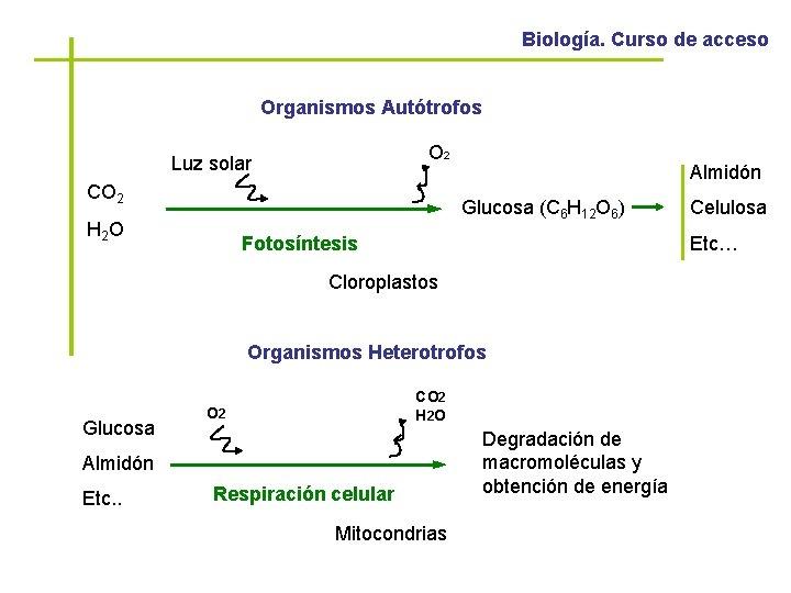 Biología. Curso de acceso Organismos Autótrofos O 2 Luz solar CO 2 Almidón Glucosa