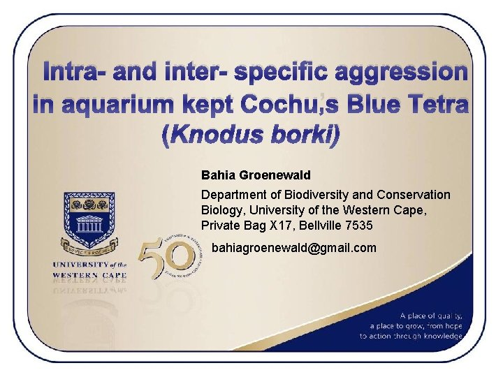 Intra- and inter- specific aggression in aquarium kept Cochu's Blue Tetra (Knodus borki) Bahia