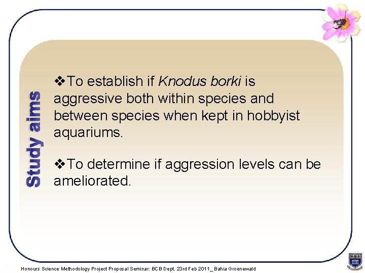 Study aims v. To establish if Knodus borki is aggressive both within species and