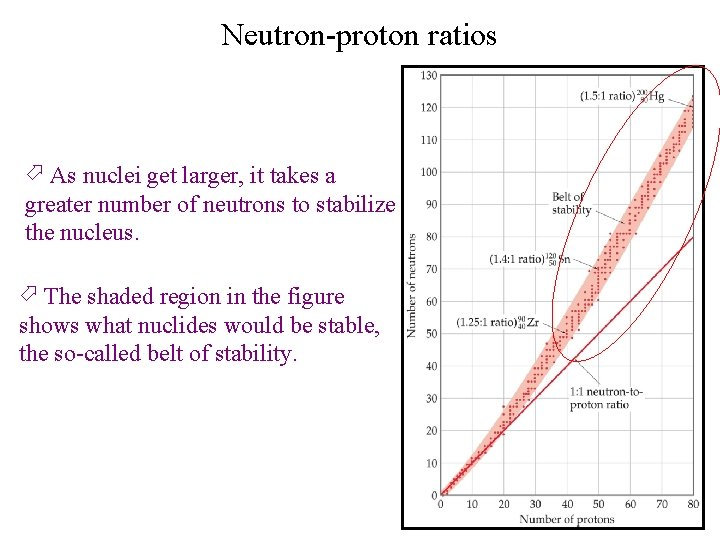 Neutron-proton ratios As nuclei get larger, it takes a greater number of neutrons to