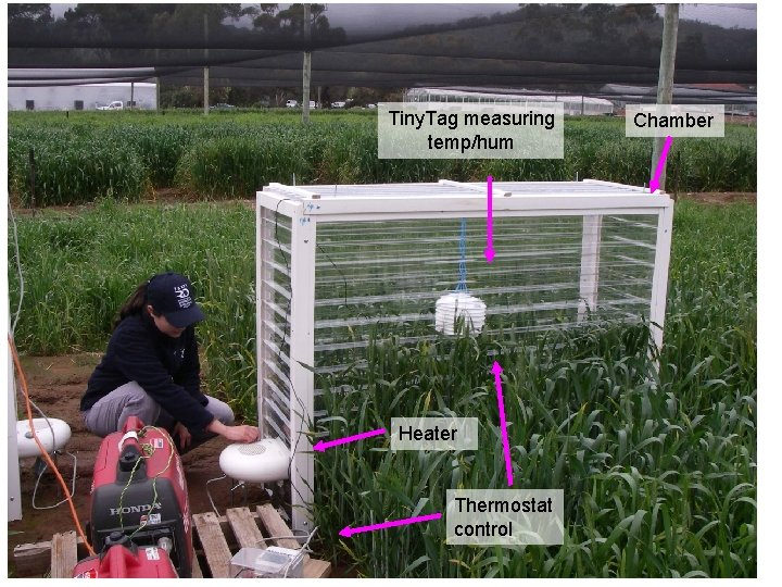 Heat stress in wheat Tiny. Tag measuring temp/hum Heater Thermostat control Chamber