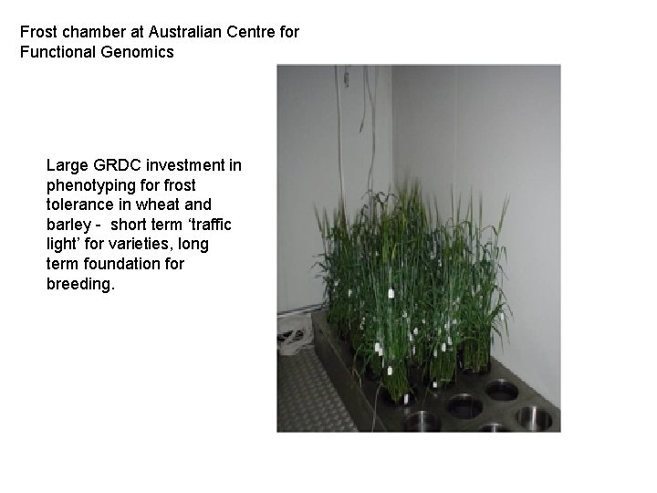 Frost chamber at Australian Centre for Functional Genomics Large GRDC investment in phenotyping for