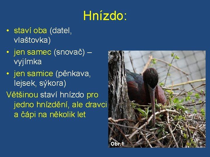 Hnízdo: • staví oba (datel, vlaštovka) • jen samec (snovač) – vyjímka • jen