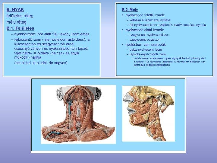 hajlító izom hipertónia ami a 2 fokozatú magas vérnyomás kockázatát jelenti