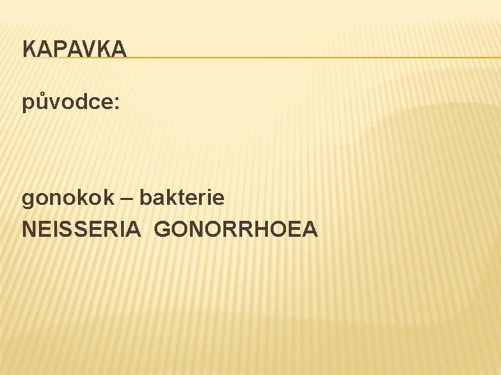KAPAVKA původce: gonokok – bakterie NEISSERIA GONORRHOEA