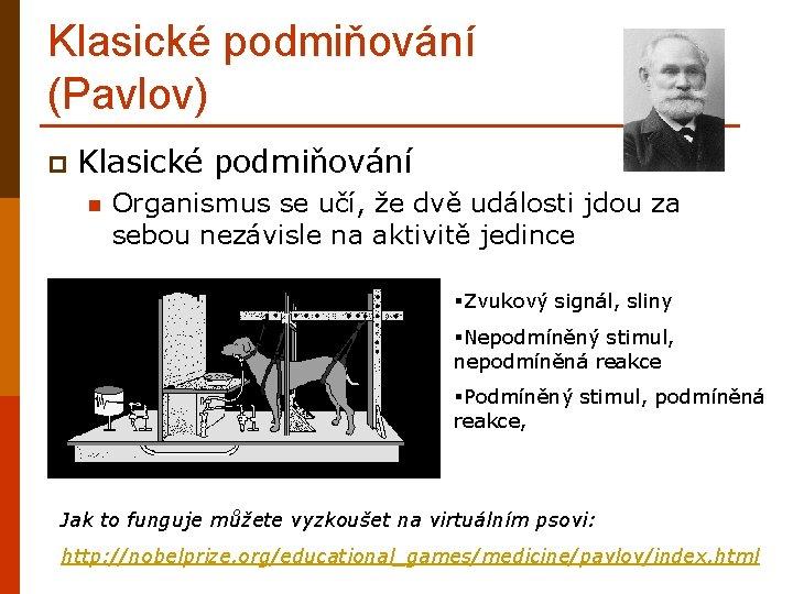 Klasické podmiňování (Pavlov) p Klasické podmiňování Organismus se učí, že dvě události jdou za