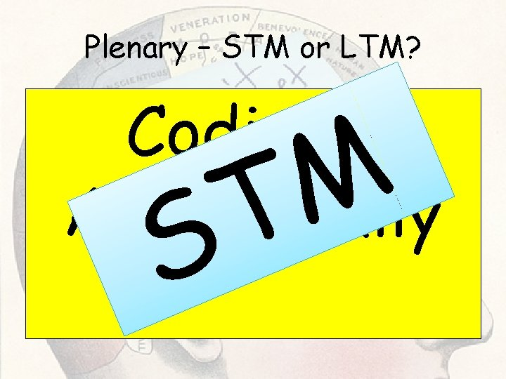 Plenary – STM or LTM? Coding Acoustically M T S