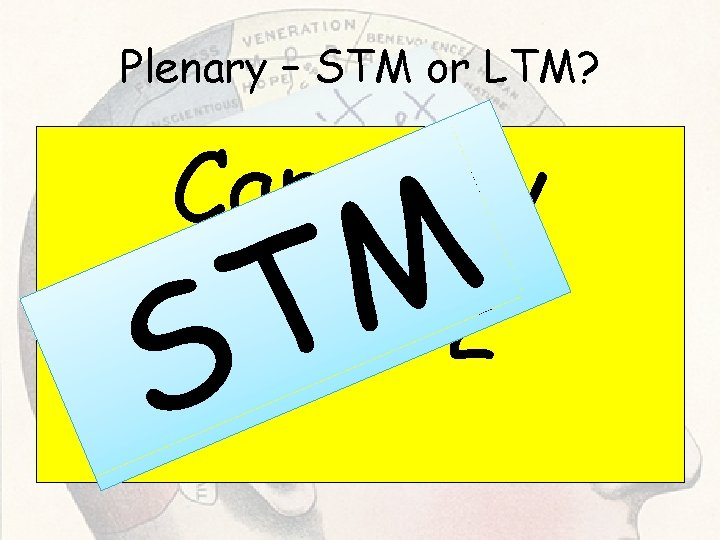 Plenary – STM or LTM? Capacity 7+/- 2 S M T