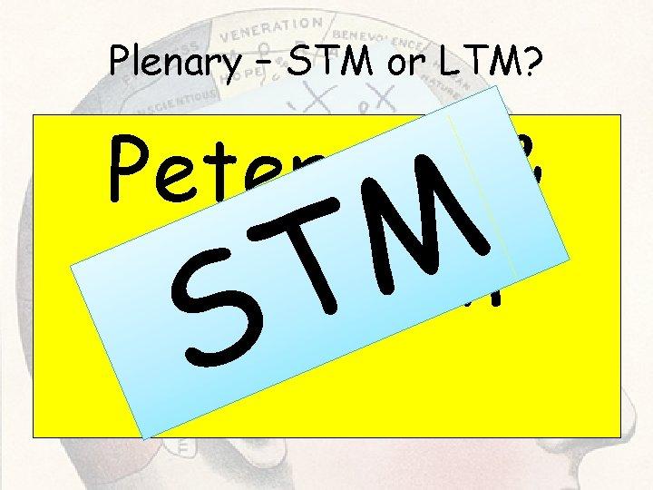 Plenary – STM or LTM? Peterson & Peterson M T S