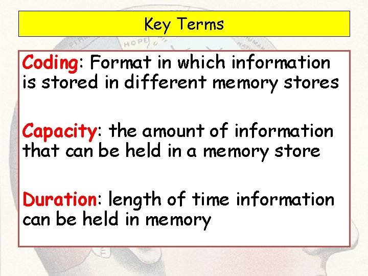 Key Terms Coding: Format in which information is stored in different memory stores Capacity: