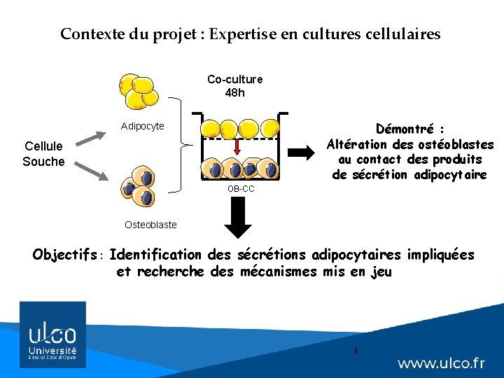 Contexte du projet : Expertise en cultures cellulaires Co-culture 48 h Démontré : Altération