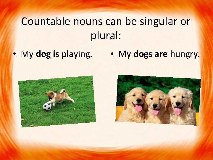 Countable nouns can be singular or plural: • My dog is playing. • My