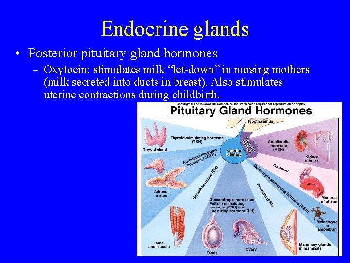 "Endocrine glands • Posterior pituitary gland hormones – Oxytocin: stimulates milk ""let-down"" in nursing"