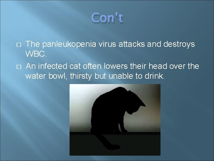 Con't � � The panleukopenia virus attacks and destroys WBC. An infected cat often