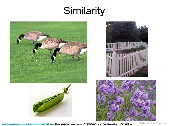 Similarity http: //chicagoist. com/attachments/chicagoist_alicia/GEESE. jpg , http: //wwwdelivery. superstock. com/WI/223/1532/Preview. Comp/Super. Stock_1532 R-0831. jpg