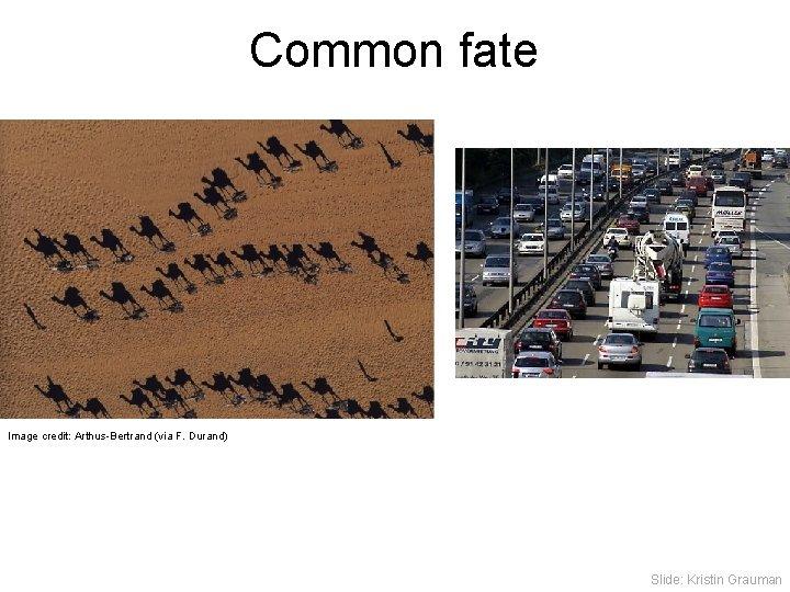 Common fate Image credit: Arthus-Bertrand (via F. Durand) Slide: Kristin Grauman