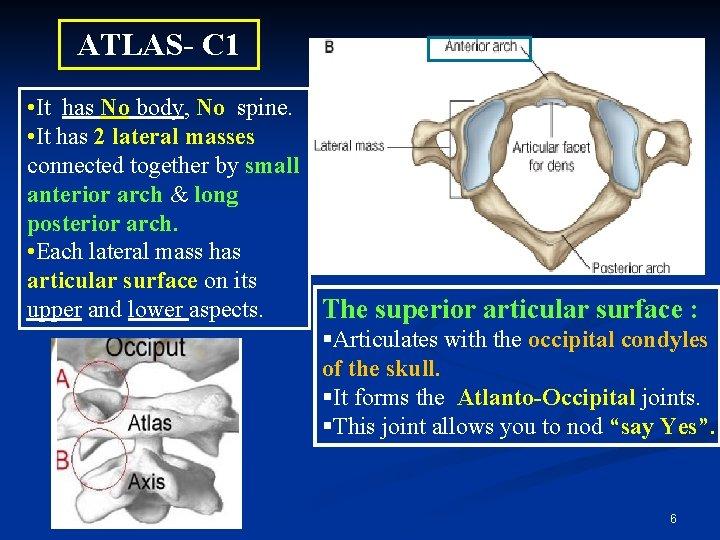 ATLAS- C 1 • It has No body, No spine. • It has 2