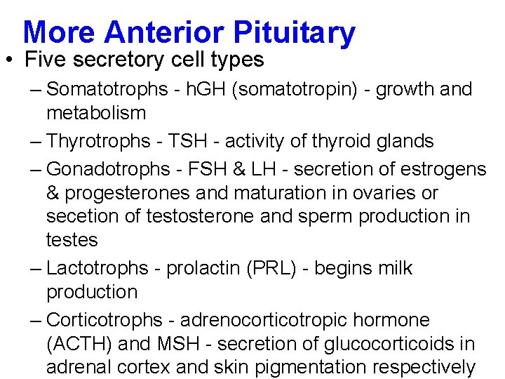 More Anterior Pituitary • Five secretory cell types – Somatotrophs - h. GH (somatotropin)