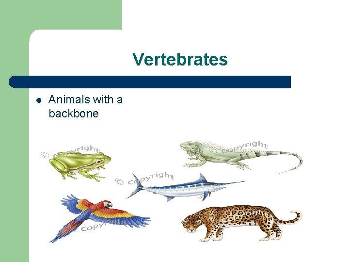 Vertebrates l Animals with a backbone