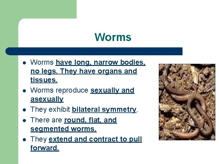 Worms l l l Worms have long, narrow bodies, no legs. They have organs