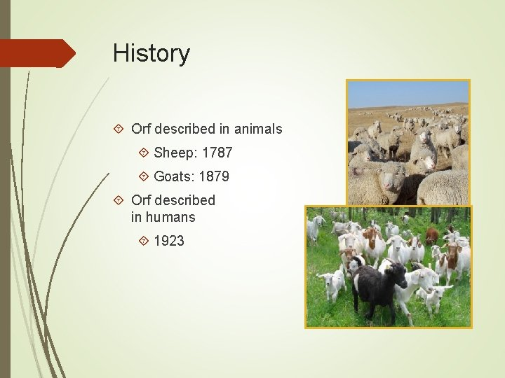 History Orf described in animals Sheep: 1787 Goats: 1879 Orf described in humans 1923